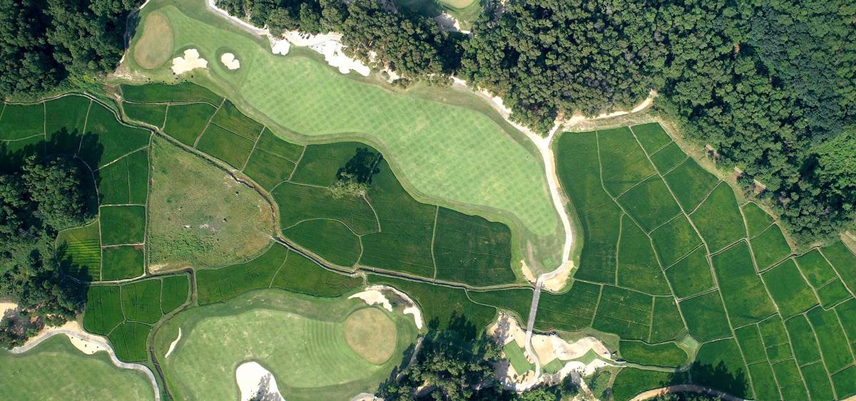 Cánh đồng lúa trong sân golf ở Lăng Cô